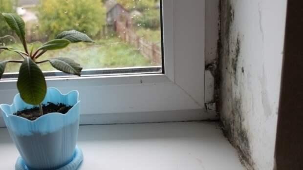 Биолог Дьяков предупредил об опасности плесени на стенах