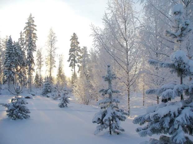 В парке «Тушинский» создадут живописные полотна на снегу