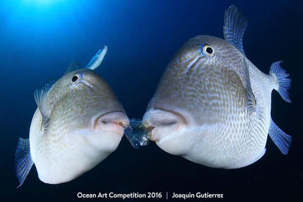 Снимки-победители Конкурса подводной фотографии 2016