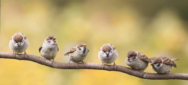 Воробьи доминируют: наЗемле больше птиц, чем людей: Новости ➕1, 18.05.2021