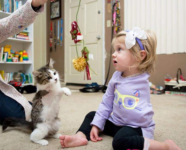 Трехлапый котенок стал лучшим другом малышки, у которой ампутировали руку Счастливый конец, животные, спасение