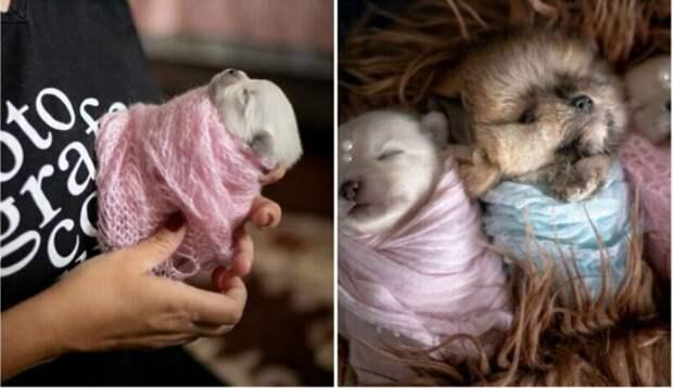 Мимишность зашкаливает: чудесная фотосессия новорожденных щенков