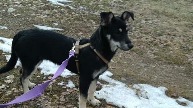 Гуляя с собакой, девушка нашла двух замерзающих щенков и решила их спасти