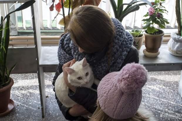 В Новосибирске пристроили бездомных животных (фото)