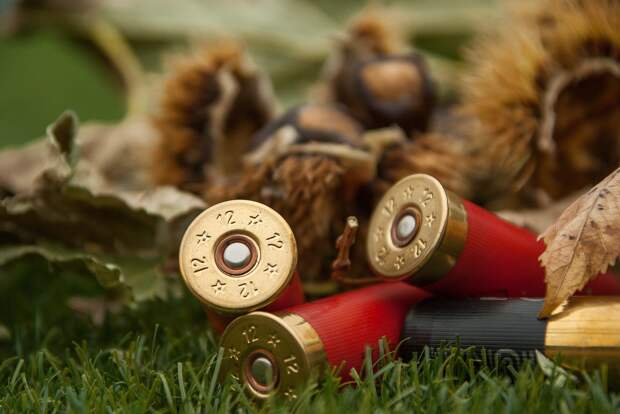 В Удмуртии за три дня выявили 29 нарушений правил охоты и обращения с оружием