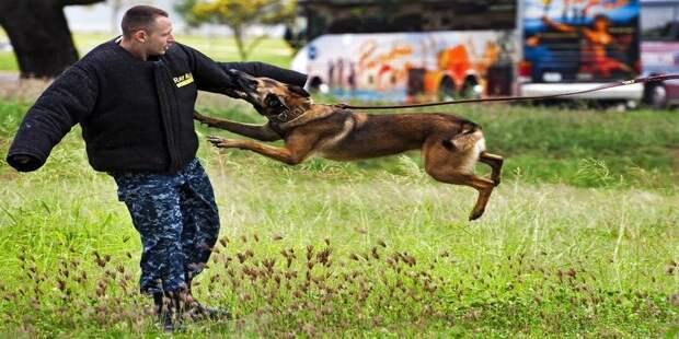 2. Защита во время нападения собаки: действуйте быстро бродячие собаки, животные, нападение, напала собака, опасно, самооборона, собаки, советы