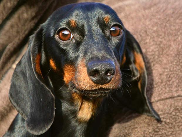 В Москве домашняя собака покусала соседского ребенка
