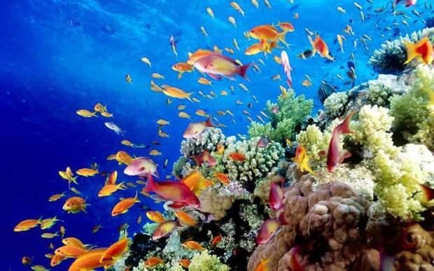 Большой Барьерный риф национальный парк интересное, мир, национальный парк