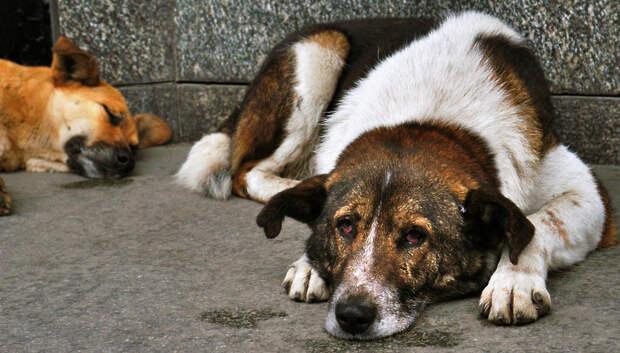 Подольчанин пожаловался на стаю агрессивных собак, набросившуюся на школьника