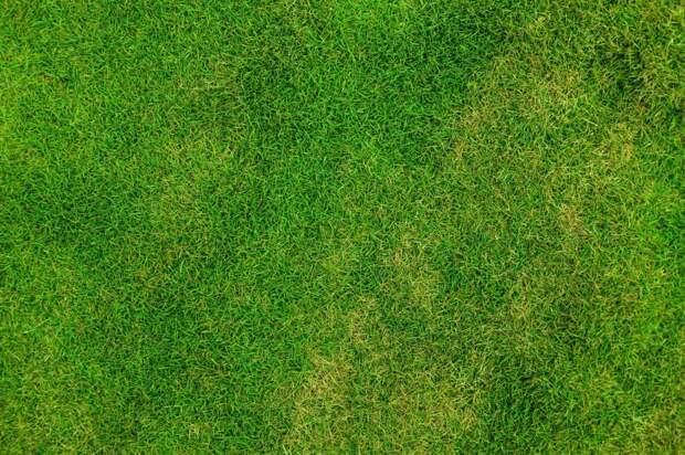 Возле дома на Лосевской посеяли газонную траву