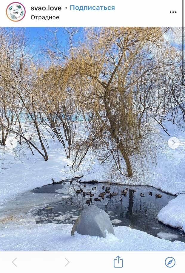 Фото дня: пернатые обитатели парка «Отрада»
