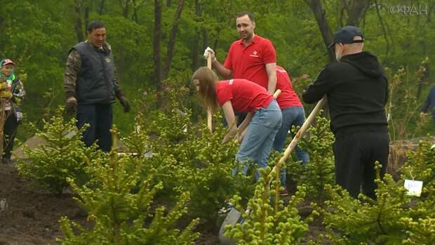 Масштабная акция по высадке деревьев прошла во Владивостоке