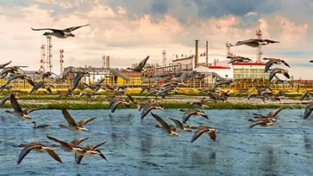 Вклиматическом рейтинге «Роснефть» получила самую высокую оценку среди российских компаний