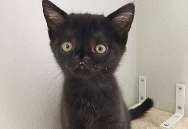 Необычный котенок сидел на улице и пищал изо всех сил, пытаясь привлечь внимание к себе…