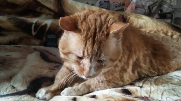 Девушка приютила уличного кота, но тот часто уходит на улицу. Она надеется, что МУРлыка привыкнет…
