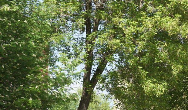 Власти прокомментировали жалобы навырубку деревьев Щелоковского хутора