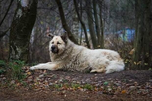 Бездомный пёс Кефир - друг детей и защитник слабых