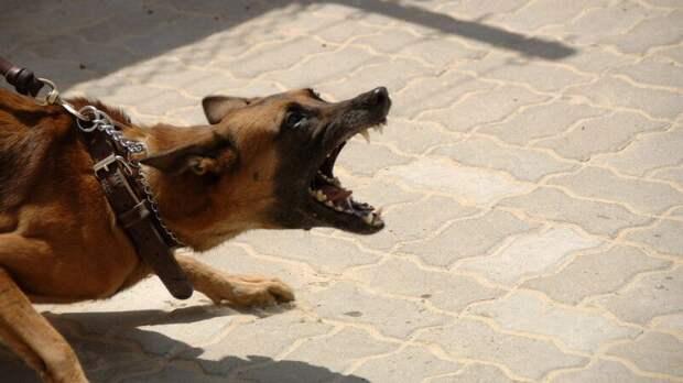 Четырехлетний мальчик умер после нападения стаи бродячих псов в Башкирии