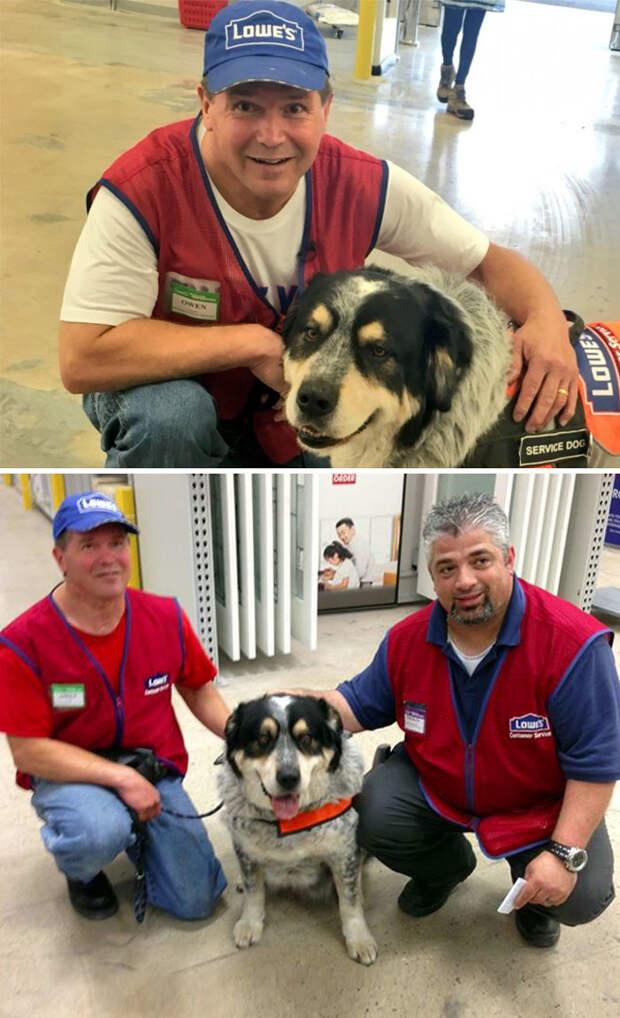 Мужчина не мог найти работу из-за собаки-поводыря. Но один из супермаркетов решился принять на работу обоих Счастливый конец, животные, спасение