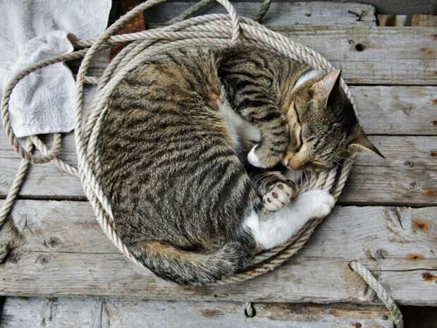 10. Если вы больны, кошка не лезет с лекарствами, а просто спит рядом. жены, интересное, кошки, юмор