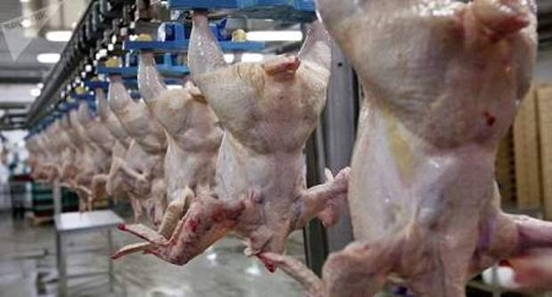 В России отпускные цены на мясо курицы начали снижаться