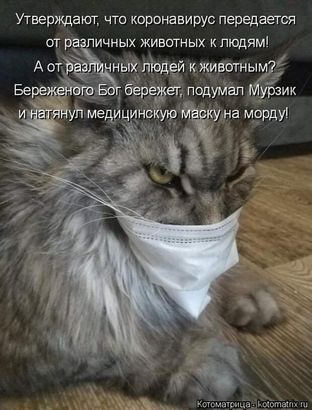 kotomatritsa_2 (532x700, 298Kb)