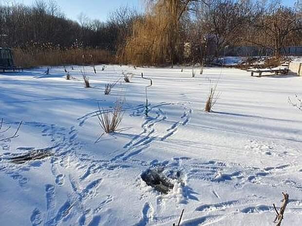 Этому небольшому пруду замор не грозит. Фото: Геннадий Шеляг.