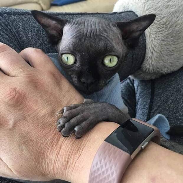 Котёнок сфинкс раскрыл мне глаза на то, что дружбы не существует