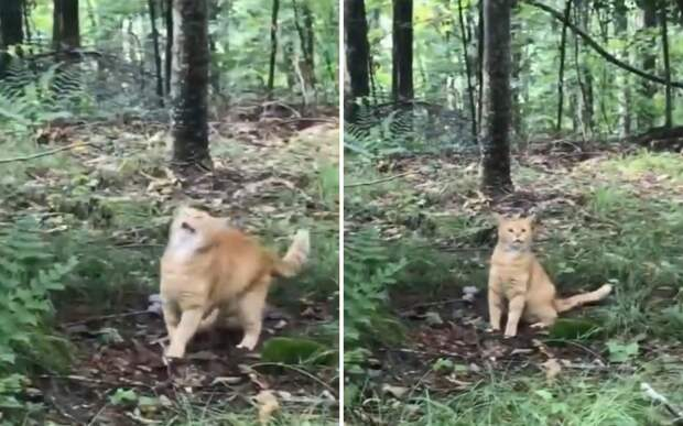 «Будь здоров!»: кот показал, что бывает во время сезонной аллергии