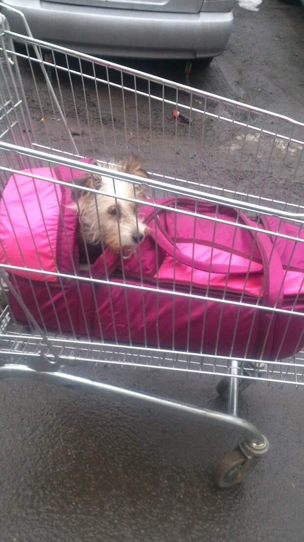 Казявочка носила на себе огромный мешок! А теперь брошенную собаку… саму носят на руках :)
