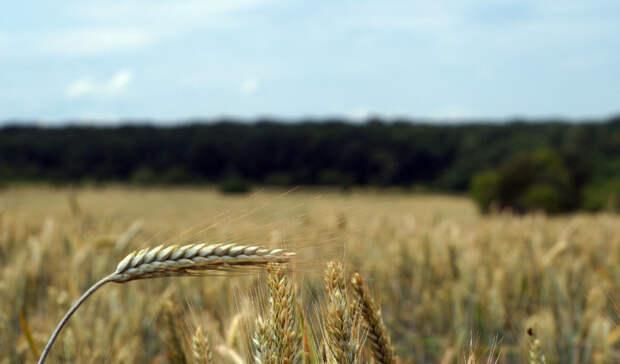Сезон стартовал: весенне-полевые работы начались вНижегородской области