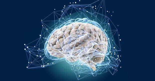 Американские ученые обнаружили омолаживающую мозг молекулу TET1