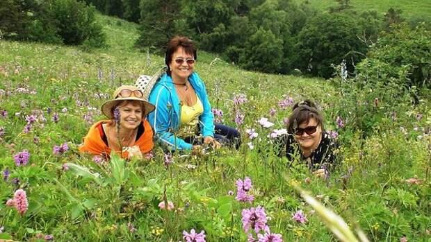 Где в России можно увидеть альпийские луга?