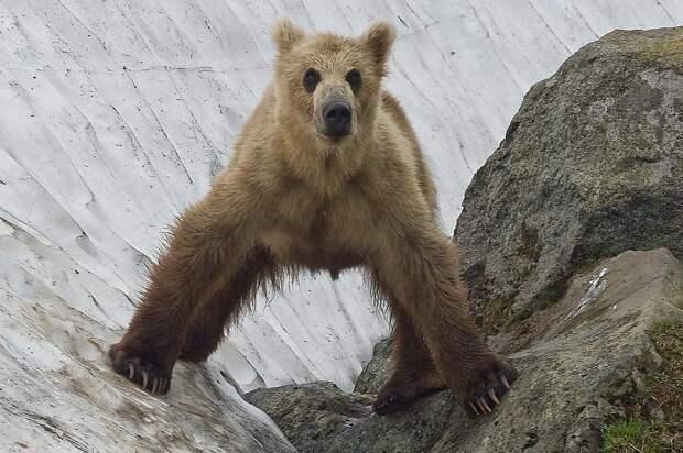 Жизнь медведя
