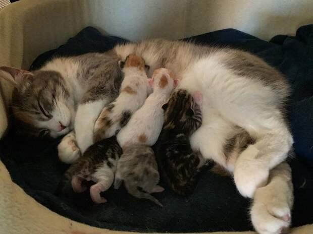 Беременная кошка дрожала от страха, прячась в углу клетки история, история спасения, котята, кошка, кошки, помощь животным, спасение животных
