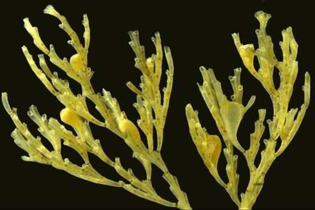 Биологи открыли новый тип строения плаценты у животных