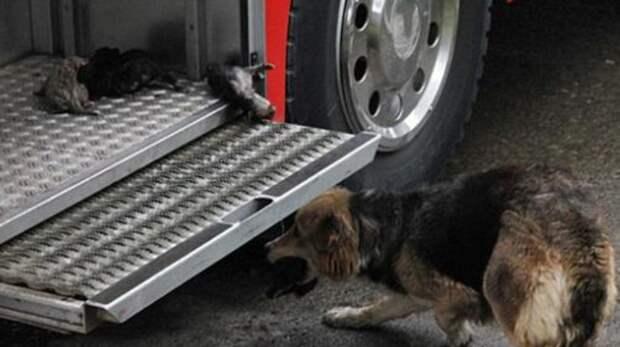 Как собака спасала своих щенков