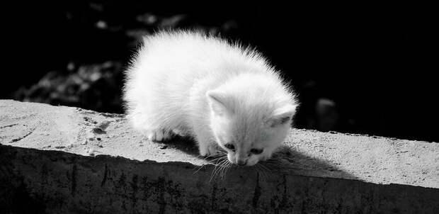 Астафий. Когда пропала мама, к котенку пришел отец (Продолжение)