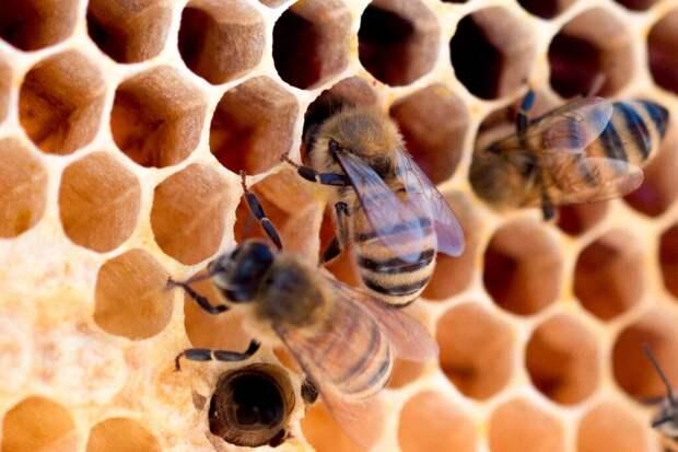 Инженеры из Израиля создали роботизированный пчелиный улей