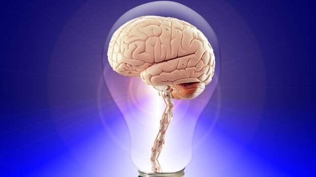 Ученые раскрыли механизм появления любопытства