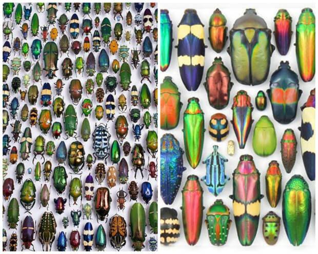 Жуки. Их много. Очень много. Очень-очень много. Кстати, а вы знаете, что ученые посчитали - 80% бтомассы Земли составляют насекомые. Т.е. мы с вами все, животные, птицы, рыбы и прочие-прочие, кроме насекомых, составляем всего 20%. Остальное они... жуки, интересное, красивое, насекомые