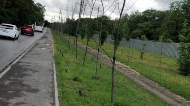 Власти Ростова-на-Дону обвинили подрядчика вгибели растений