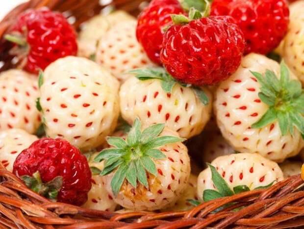 """Пайнберри – клубника-""""альбинос"""" со вкусом ананаса"""