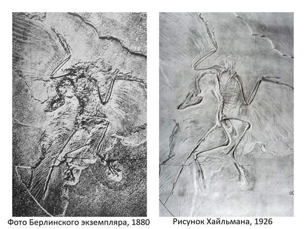 Герхард Хайльман: как датский художник сломал палеонтологию