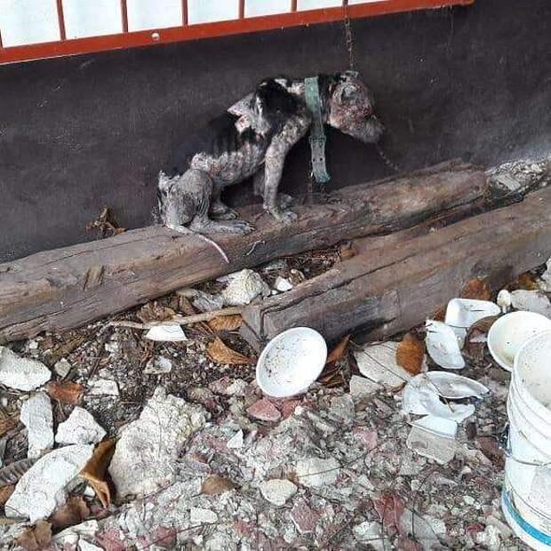 Голодающий пес прислонялся мордой к короткой цепи, чтобы поспать…