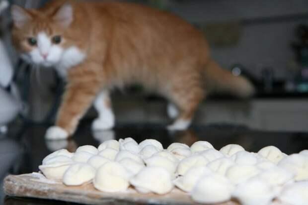 13. Если у вас есть только пельмени, на третий день кошка ест их с удовольствием. жены, интересное, кошки, юмор