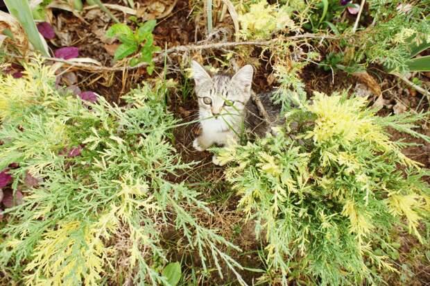 котёнок в саду