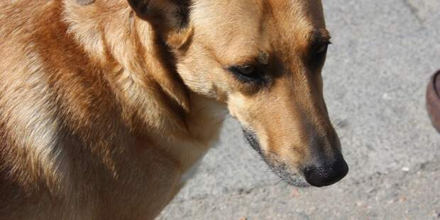 Бродячая собака стала талисманом бразильского салона автомобилей