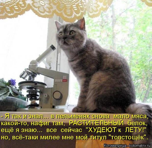 kotomatritsa_c (666x650, 350Kb)
