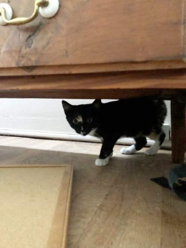 «Не кормите котенка!»: заявили руководители компании, и мужчина стал думать, как помочь бездомной малютке